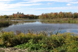 snake-cabin_0002_Marsh - view from Snake Cabin_0007_Background.jpg